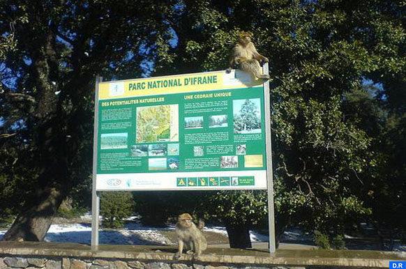 Parc national d'Ifran