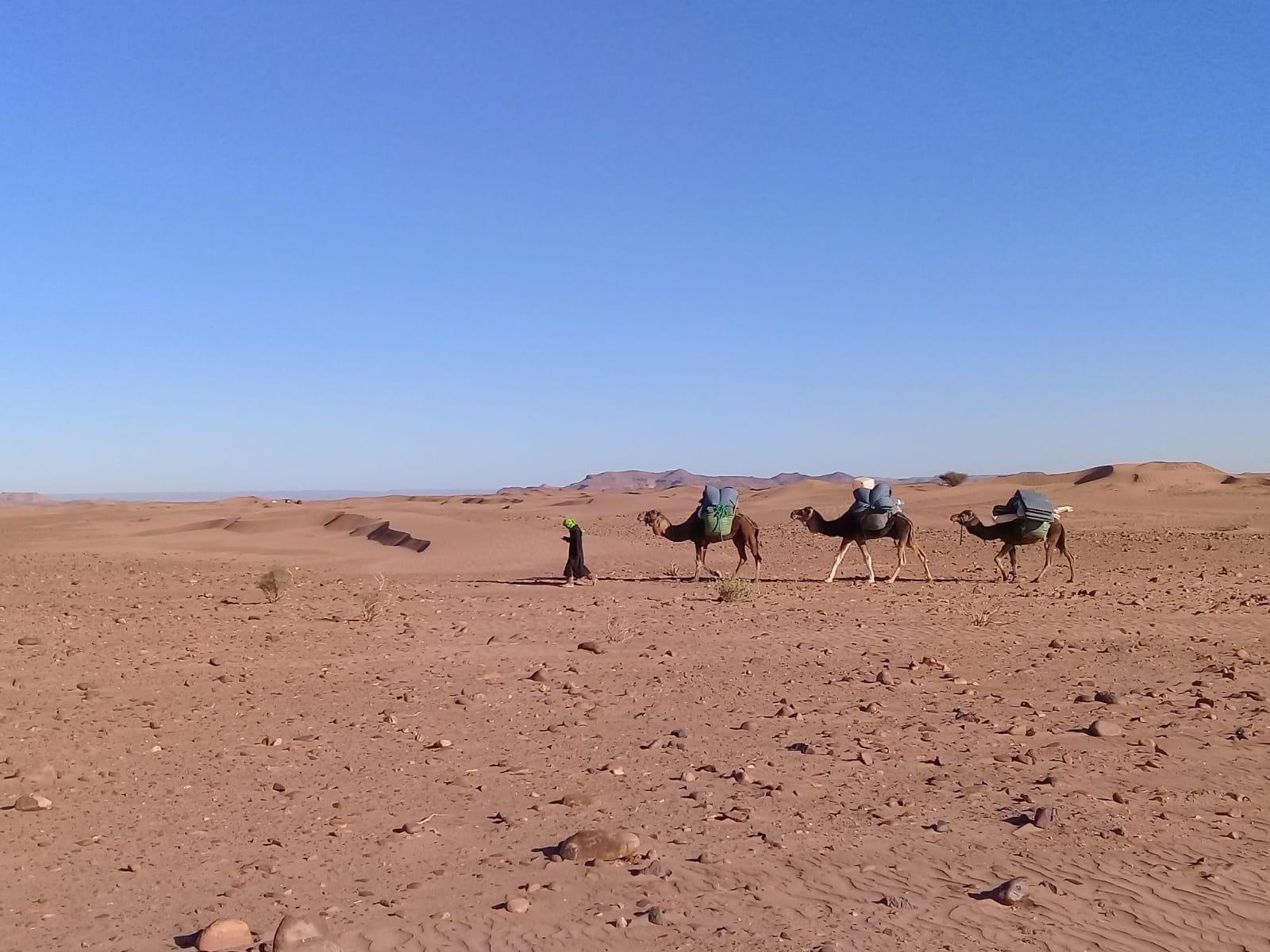 petites dunes du Draa